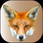 renard-