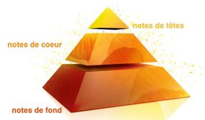la pyramide olfactive
