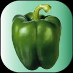 poivron-vert